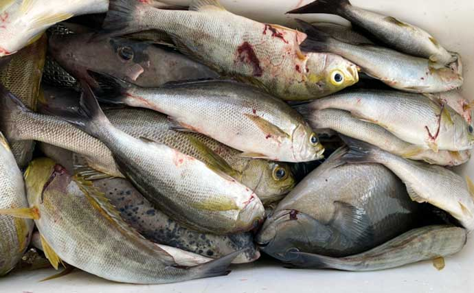 【福岡】沖のエサ釣り最新釣果 落とし込み&泳がせ釣りで青物好調