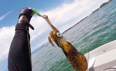 4日連続ボートエギング釣行 1kg級頭にアオリ4杯【葉山釣具センター】