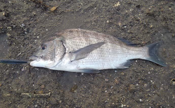 ショアジギで65cmマゴチ ブレード付きジグでヒット【熊本・深海漁港】