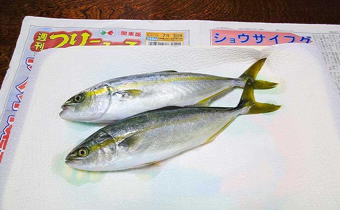 手漕ぎボートで悠々コマセ釣り ワカシ6匹キャッチ【神奈川・長者ヶ崎】