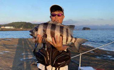 磯での投げ釣りで予想外の53cm良型イシダイ手中【和歌山・天神崎】