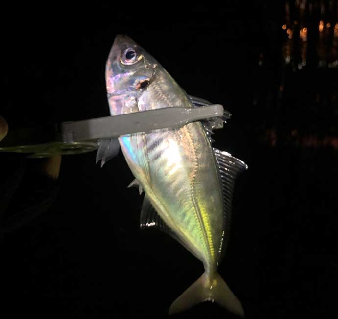 今さら聞けないアジングのキホン:魚のサイズに合わせたリーダー選び方