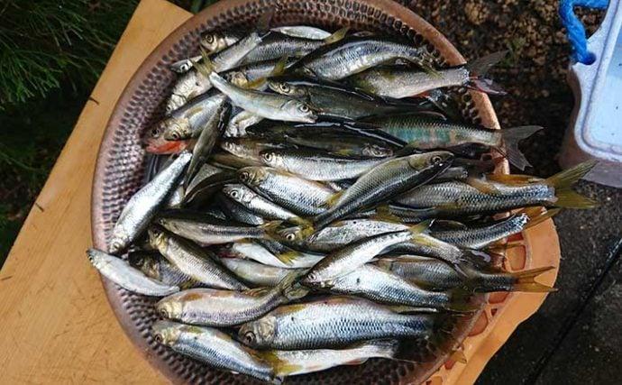 『オランダ仕掛け』の淡水小物釣りで1時間60匹の大釣り【宮崎・本庄川】