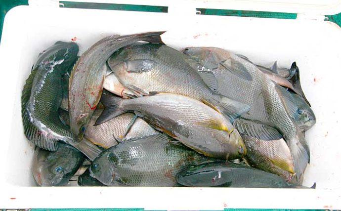 宮崎県は磯釣りパラダイス 大型の数釣りも可能な代表的な3エリアを紹介