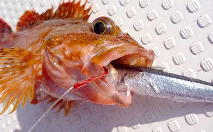 覚えておきたい釣りエサの『刺し方』3選 種類は変われどキホンは同じ