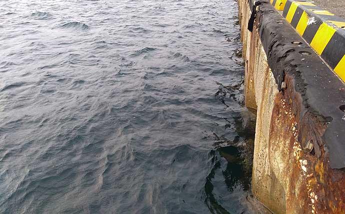 有名ファミリー釣り場『三崎港』に潜む大型モンスター3選【神奈川】