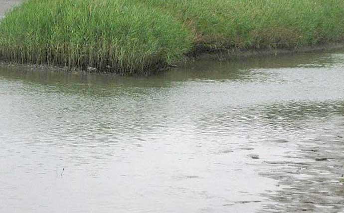 夏ハゼ好釣り場の見つけ方3選 様々な『変化』を狙ってみよう