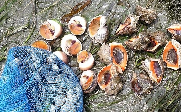 潮干狩り上級者にオススメの『アカニシ貝』採取方法 下処理&レシピも