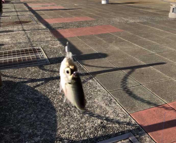 今さら聞けないアジングのキホン:デイアジング 釣れなくても当然?