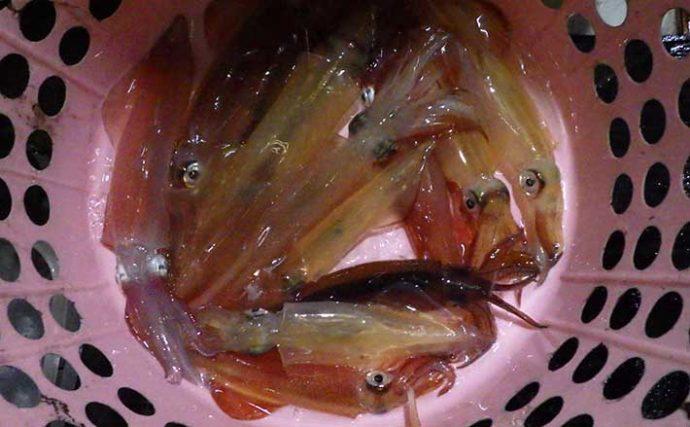 盛期突入の「ケンサキイカ」をおいしく食べる工夫 沖漬けは2度漬ける?
