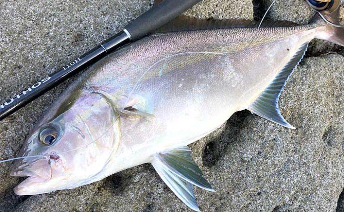 ショアジギングで3kg超カンパチ 高水温で釣れないはウソ?【神津島】