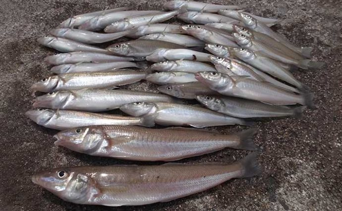 都市近郊の好投げ釣り場:高砂港 ファミリーにも本格派にもオススメ