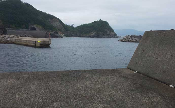 夏の風物詩「カマスゲーム」開幕 朝マヅメに25cm級5尾【和歌山】