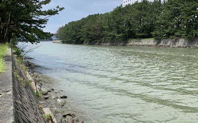 陸っぱりハゼ釣り堪能 想定外のゲストはマゴチにワタリガニ【浜名湖】