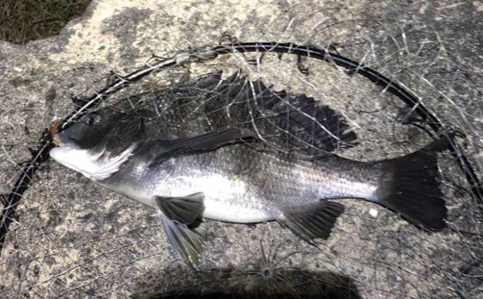 アジングタックル流用で楽しむチニングのススメ 「ながら」釣りでOK