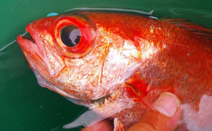 【関東2020秋】高級魚代表「アカムツ」釣りのキホン 秋は入門好機