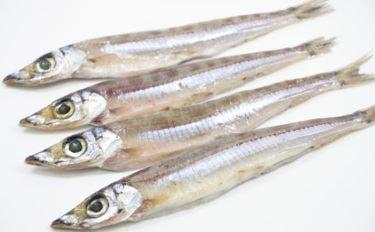 解禁直後の日本海「底引き網漁」で『ニギス』豊漁 通が知る美味しい魚?