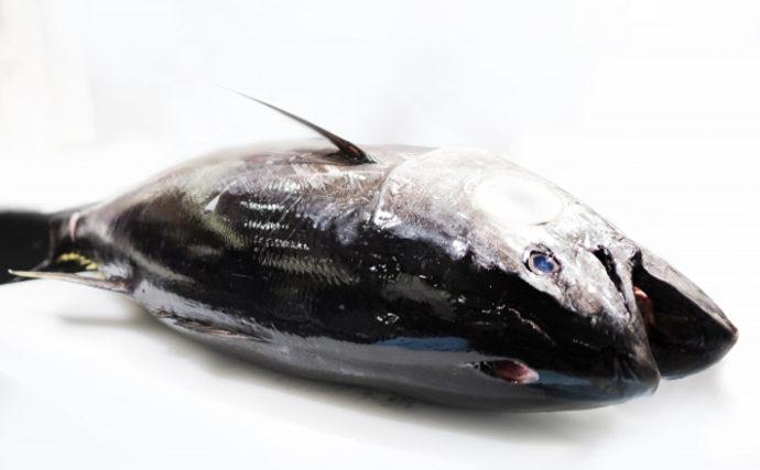 オホーツク海にマグロ・小樽沖ではシイラ 北海道の海で一体何が?
