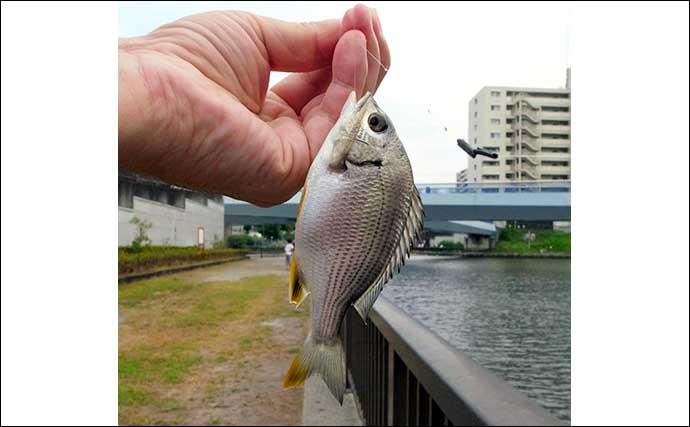 仕事帰りのハゼ釣りで10cm級入れ食い 32尾手中【東京・クローバー橋】