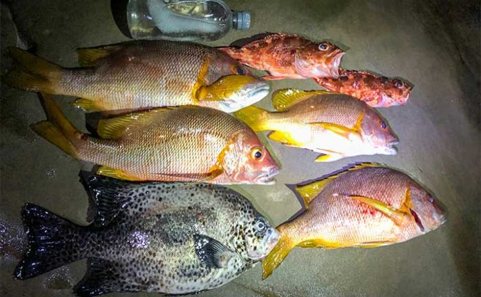 夜の沖磯ぶっこみ釣りで48cmシブダイ ウニエサにヒット【宮崎・油津】