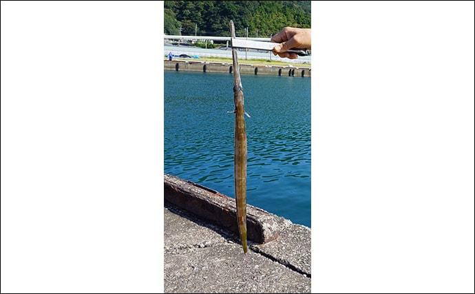 ウマヅラの高級魚「アカヤガラ」は初秋が旬 見た目は悪いが味は上品