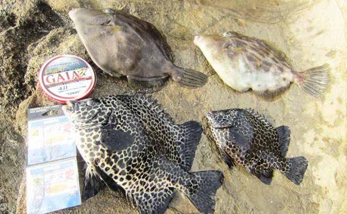 高水温期の磯は『カラス貝の落とし込み釣り』がオススメ【神奈川・三浦】