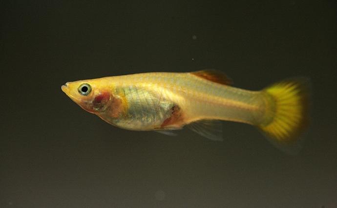 「騒音」が魚に与える影響を実験 平均余命が1割以上も短くなった?