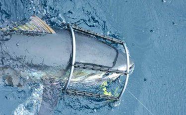 相模湾コマセマグロ船で良型手中 「マグロッ!リングの柱」が効果発揮?