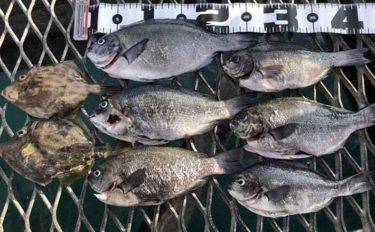 ウキフカセ釣りで『夏グレ』攻略 28cm頭に6匹キープ【脇田海釣り桟橋】