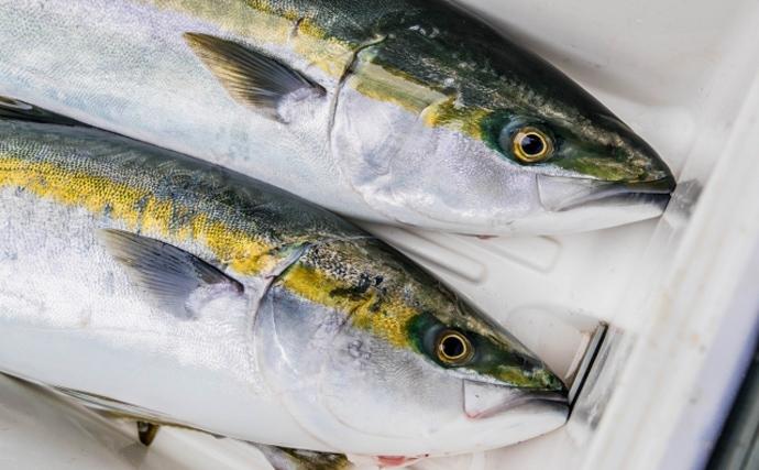 新たに15魚種が漁獲量規制の可能性 ブリやマダイやヒラメも対象