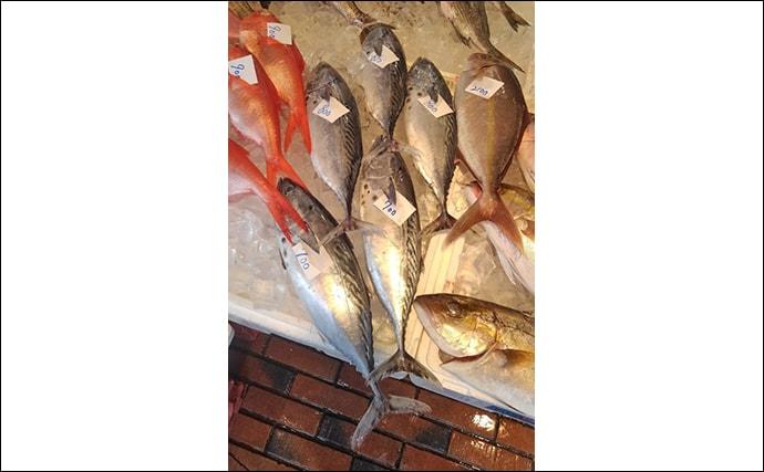 魚介で地域活性化:愛媛の『媛スマ』は全身大トロ 養殖魚としても注目