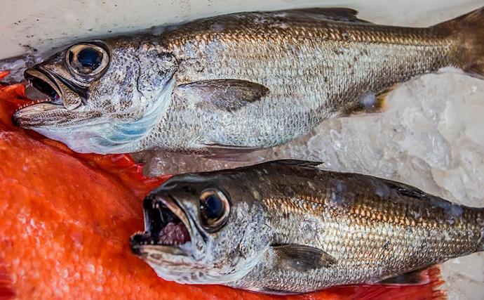 秋が旬の高級魚『ムツ』 不名誉な呼び名「オンシラズ」のワケとは?