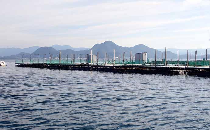 海上釣り堀の「スレた」サカナをミャク釣りで攻略【海上つり堀まるや】