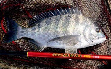 20年ぶりに堤防釣りに挑戦 フカセ釣りで良型チヌ手中【相模川河口】