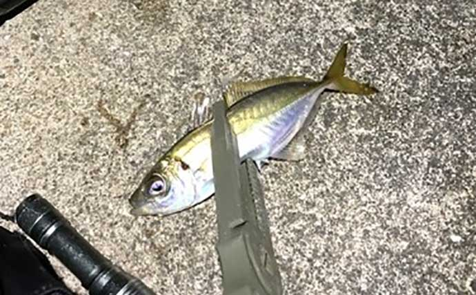 今さら聞けないアジングのキホン:タックル以外の釣行マストアイテム