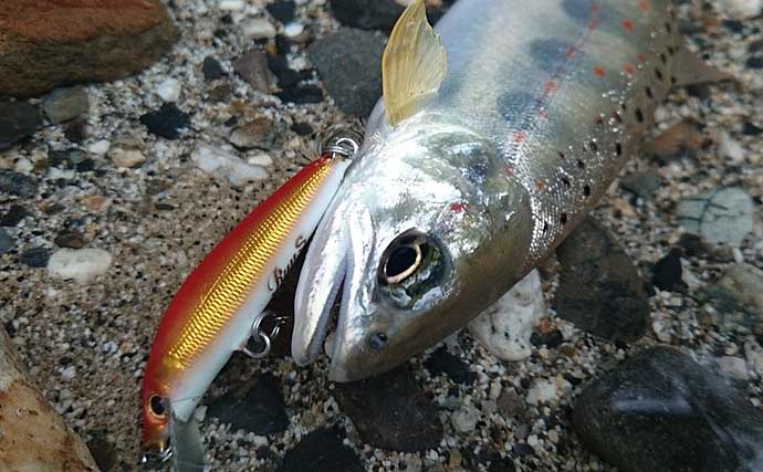 終盤戦の渓流釣行 シンキングミノーで22cmアマゴ手中【奈良・旭川】