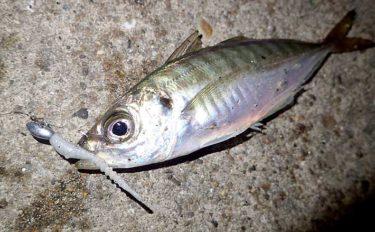 今さら聞けないアジングのキホン:釣行後の『メンテナンス』を紹介