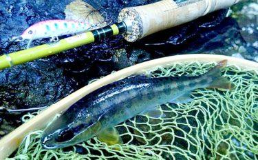 涼を求めて渓流ルアー釣行 18cm頭にアマゴ3尾と対面【奈良・舟ノ川】