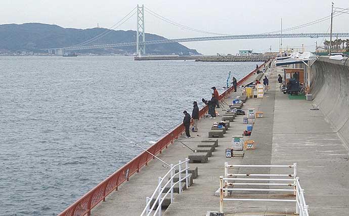 【大阪湾2020秋】波止の良型アジを「サビキ釣り」で狙うコツ4選