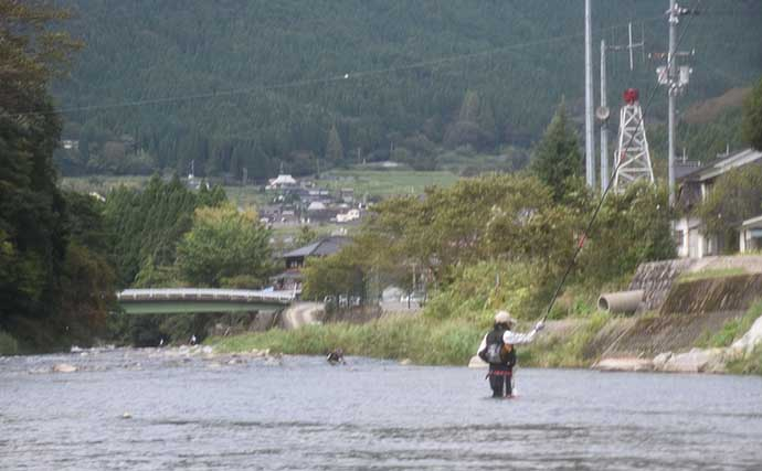 シーズン終盤のトモ釣りで『良型アユ』の引きを満喫【兵庫・引原川】