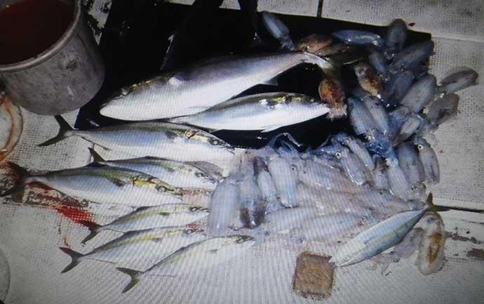 エギングでの『中オモリ』活用法 バーチカルな釣りでは断然オススメ