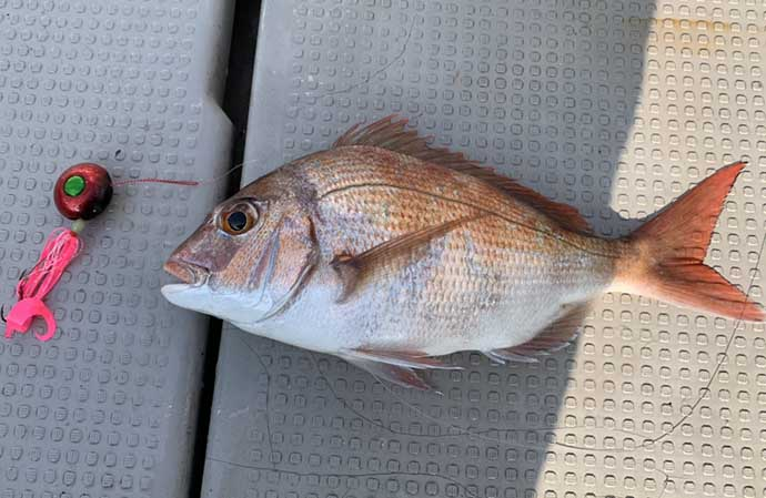 ワンタックルで楽しむリレー釣行 タイラバ&アカイカメタル【石川】