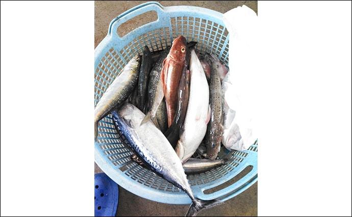 『磯焼け』の原因魚が魚醤に変身 活用が広がる「未利用魚」とは?