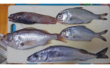 魚介で地方活性化:静岡県戸田の『深海魚直送便』が美味しい&面白い