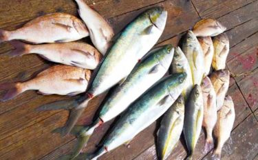 三重県の人気『海上釣り堀』10選 初心者から上級者まで満喫間違いなし
