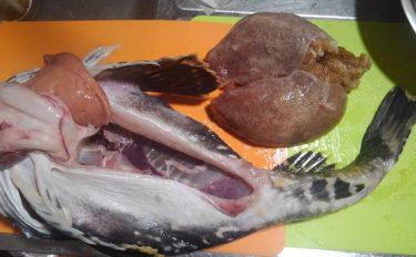 魚介類の「食べるな危険」部位:『卵巣』は美味だが毒を含むものも