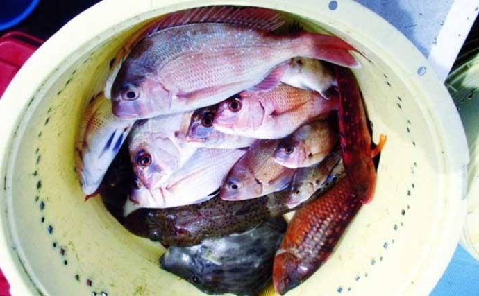 人気の『ウタセ五目釣り』でマダイにカワハギなど多彩釣果【忠栄丸】