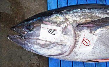 『太平洋クロマグロ』漁獲枠拡大は見送り マグロの価格は上がるのか?