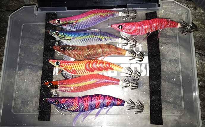 秋のアオリエギングで『数釣り』を達成するための重要ポイント3選