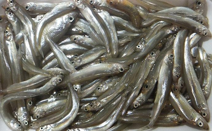 名産地『八郎湖』でワカサギ豊漁 低迷した昨年からV字回復の理由とは